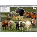Ферма за едър рогат добитък за млечна ферма - над 50 животни